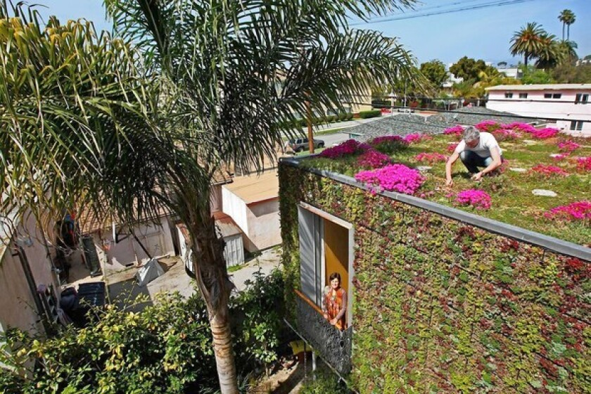 Paul Bricault picks weeds while wife Cicek appears in the master bedroom window in a part of their home that is covered in a wide variety of plants.