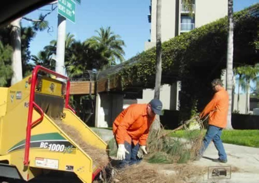 A crew shreds branches along Torrey Pines Road. FILE