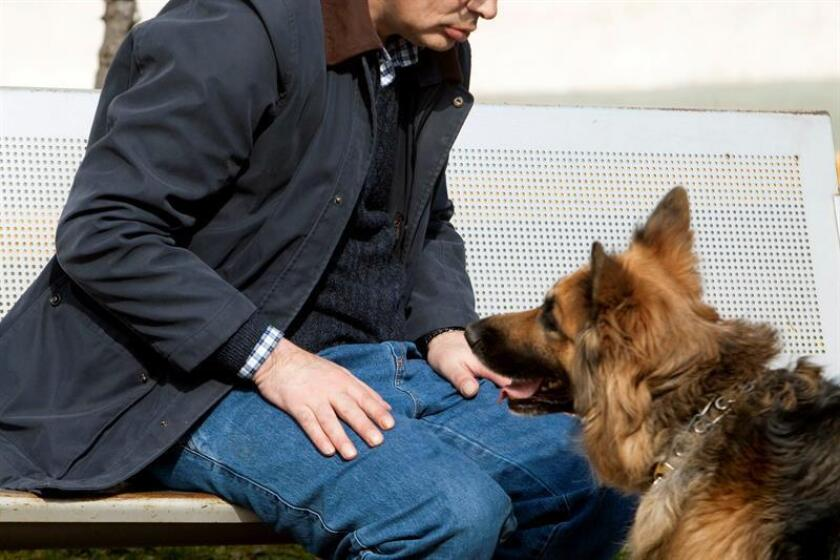 Introducir perros adiestrados con fines terapéuticos en las unidades de cuidados intensivos (UCI) de los hospitales puede aliviar el daño físico y emocional de los pacientes de una manera sustancial y segura, afirmaron hoy especialistas médicos de la Universidad Johns Hopkins. EFE/ARCHIVO