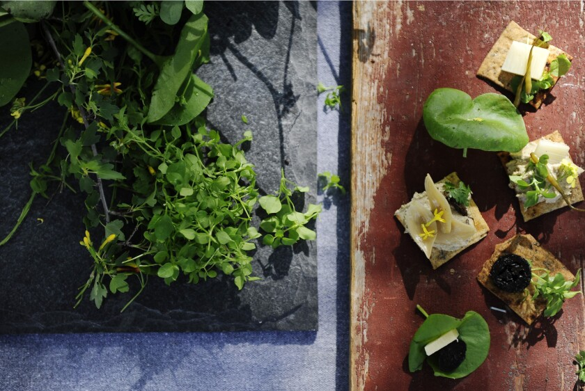 Foraging for food with Pascal Baudar