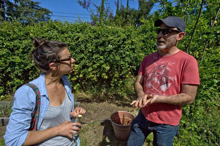 Elizabeth Bowman and Joseph Shuldiner, managers of the new Altadena certified farmers market, at the urban farm of Blaise Delacroix in Altadena.