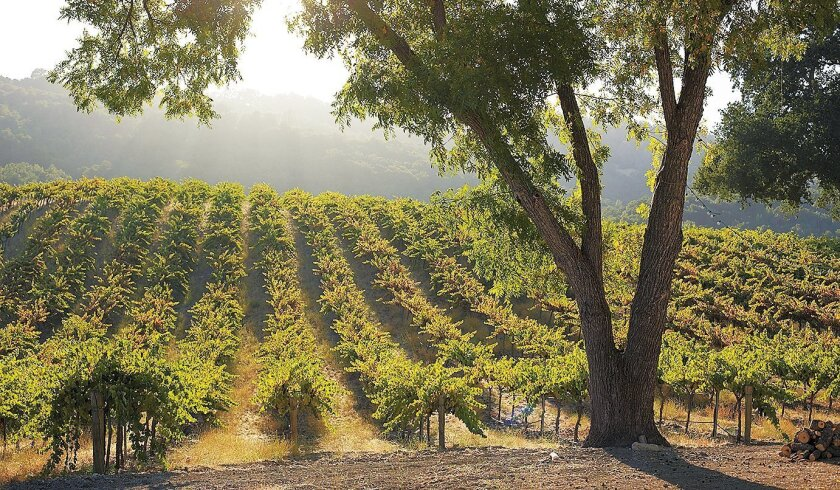 The vineyard at HammerSky Vineyards & Inn in Paso Robles.