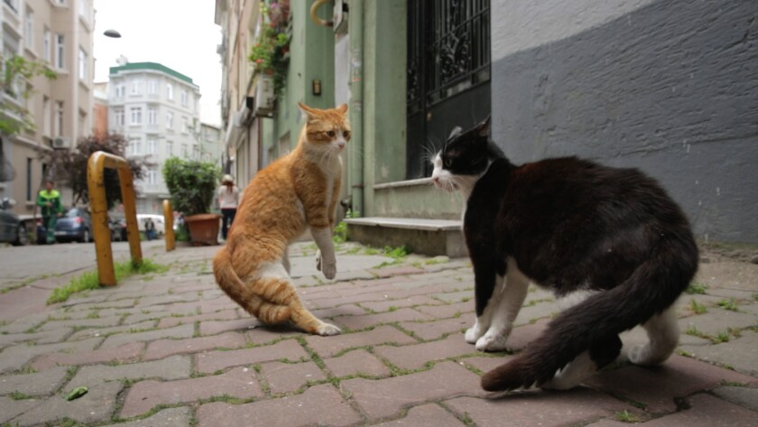 """Two cats in the documentary """"Kedi."""""""
