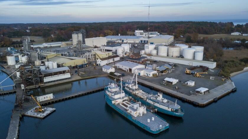 Atlantic Menhaden Sustainability Certification