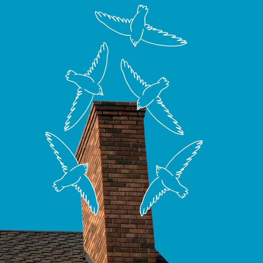 An illustration of birds circling a chimney.