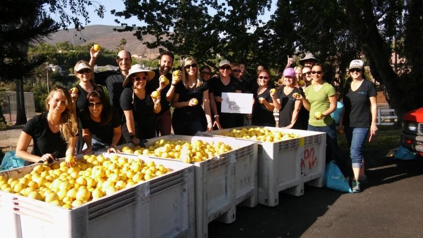 "A Jenny Craig ""Big Pick"" group harvesting effort coordinated by Encinitas nonprofit ProduceGood in spring 2018."