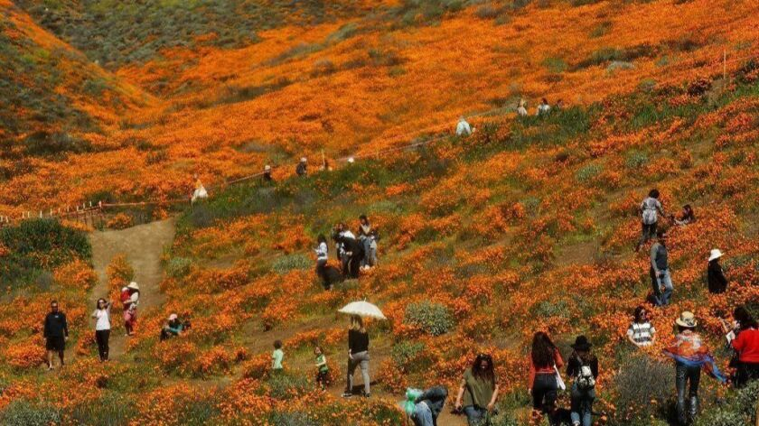 Wet Winter Weather Brings 'Super Bloom' Of Wildflowers To California