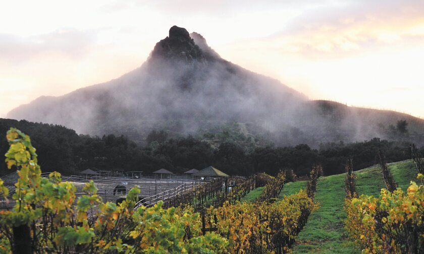 Saddlerock Ranch is the largest vineyard in Malibu's little-known wine country just miles from the world-famous beach.