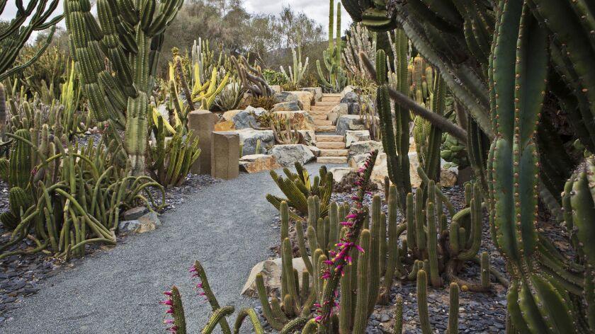 The otherworldly Cactus Garden at Ganna Walska Lotusland.