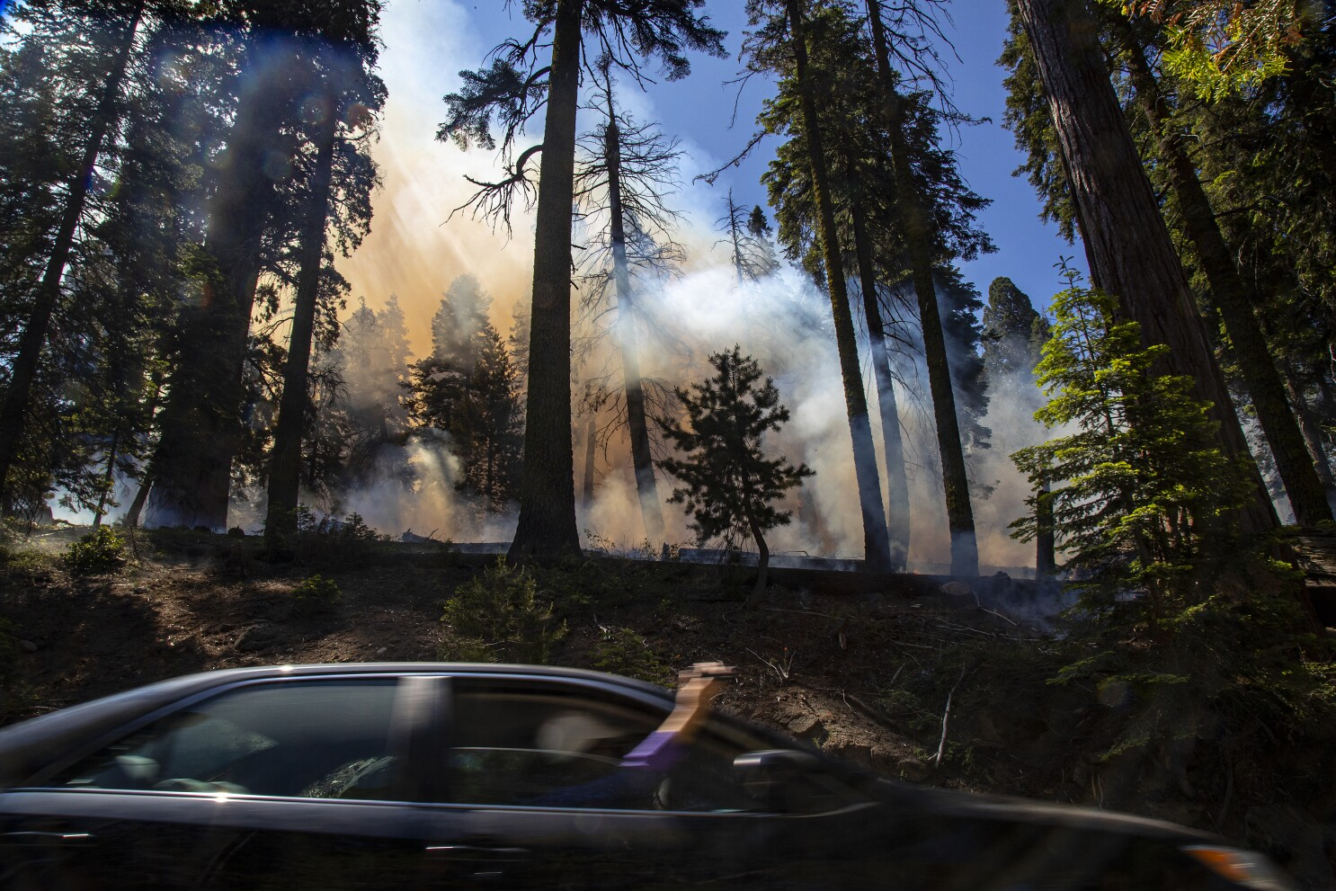 California fire mystery: No major summer brush fires after years of record destruction