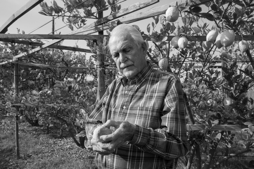 """A photograph of John Kirkpatrick as he checks for flaws in his citrons featured in the book """"The Dre"""