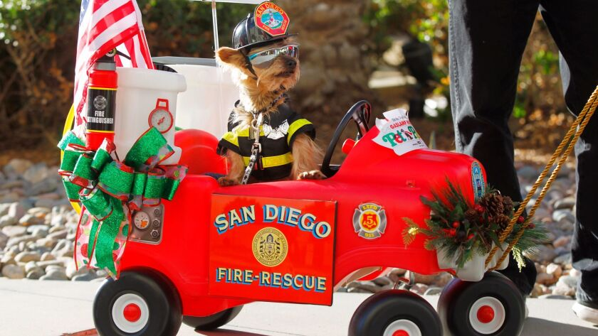 Bailey, a Yorkie, dressed as a San Diego firefighter during the Gaslamp Holiday Pet Parade in San Diego.