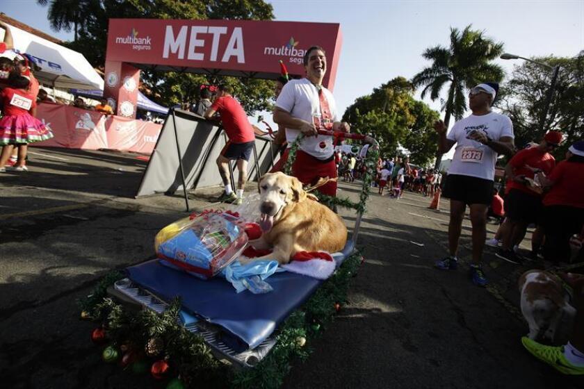 Decenas de personas participan hoy, en una carrera benéfica ambientada en las celebraciones navideñas, en Ciudad de Panamá (Panamá). EFE