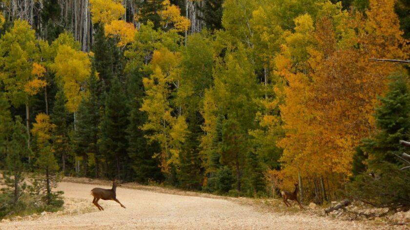 Travel dilemmas: Watch fall colors in Arizona
