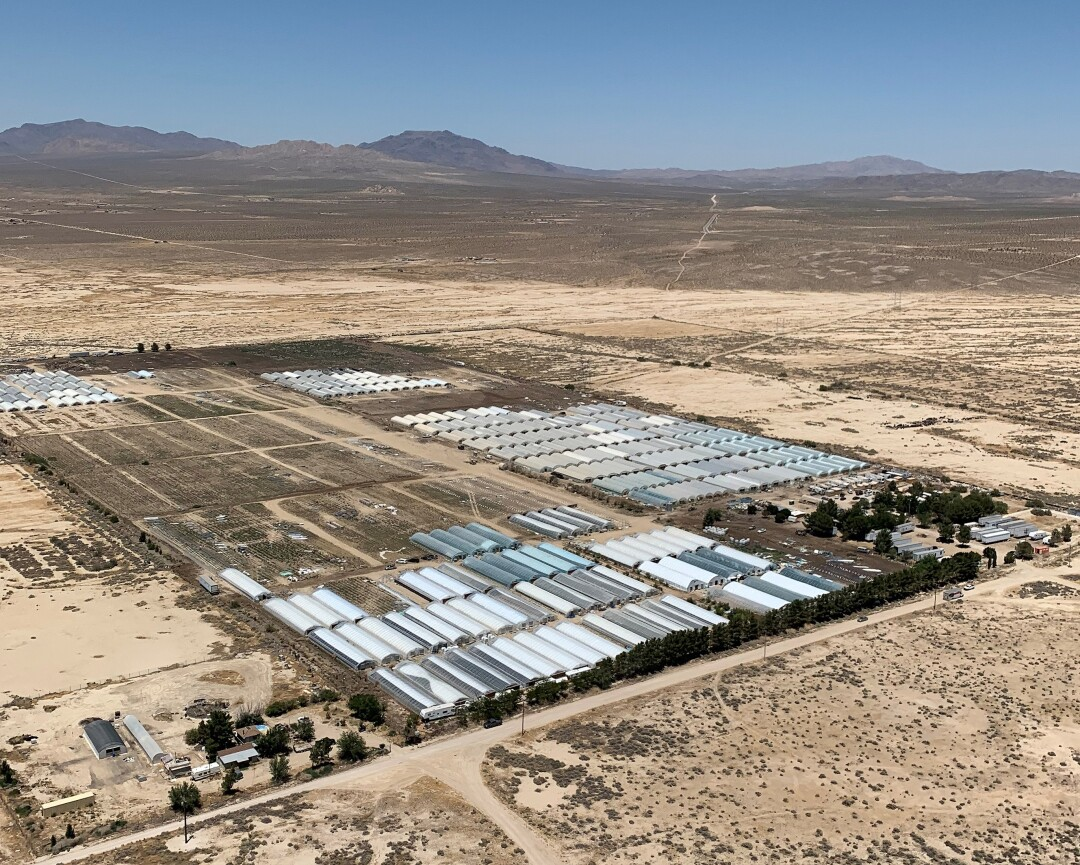 Aerial image of illegal marijuana grow farms discovered in the desert in San Bernardino County.