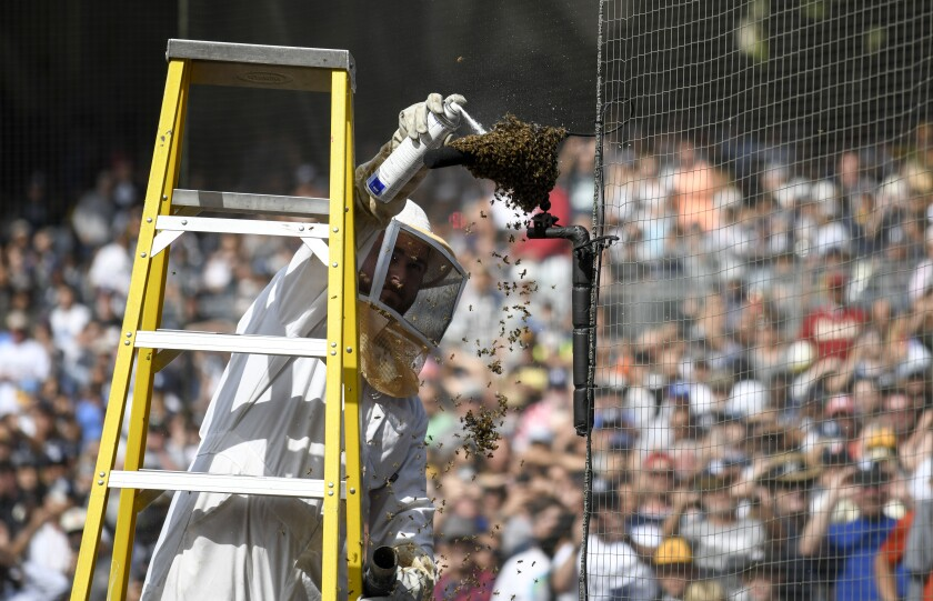 A bee delay at Petco Park on Sunday delayed the Padres-Marlins game 28 minutes.