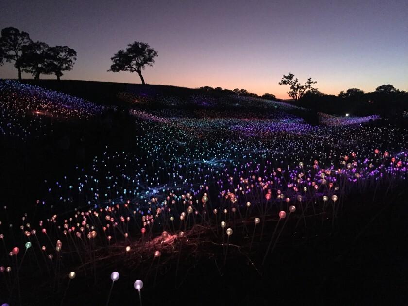 Field of Light at Sensorio
