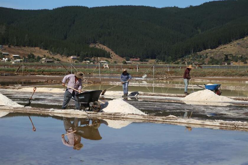 """Turistas pueden aprender en Chile un oficio que tiene 500 años: """"salinero"""""""