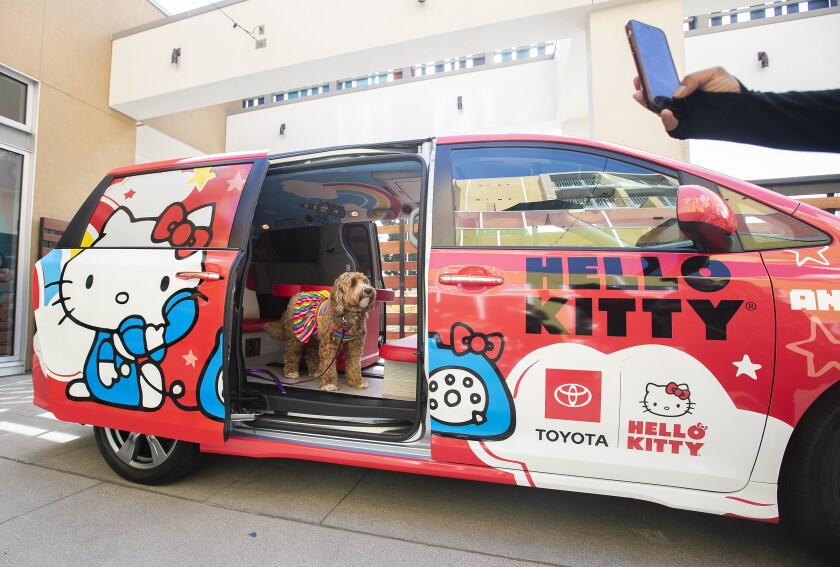 A labradoodle named Amazing Gracie Doodle stands inside a Toyota Sienna painted in the theme of Hello Kitty.