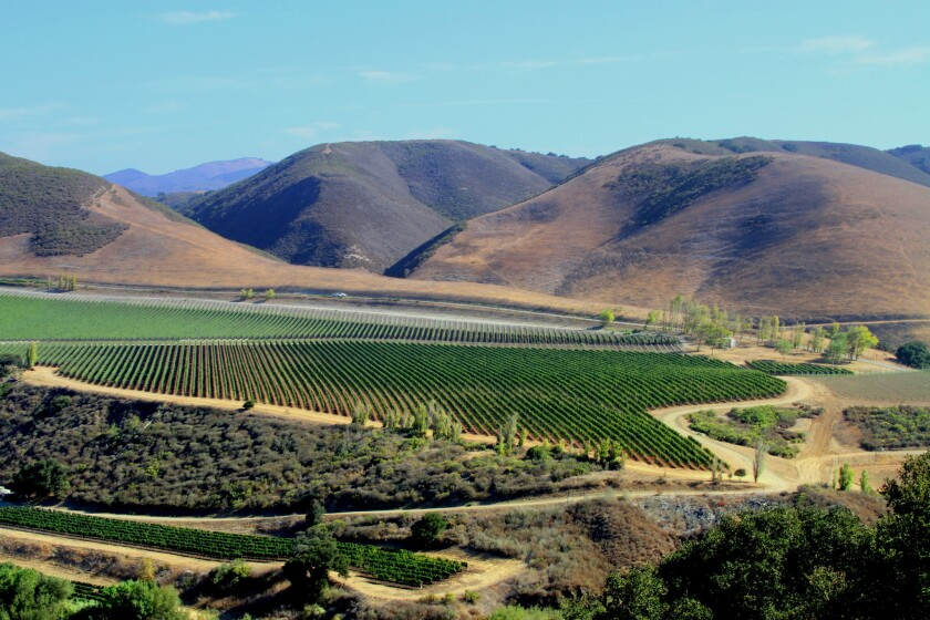 Vineyards and hills in the Lompoc Valley north of Santa Barbara.