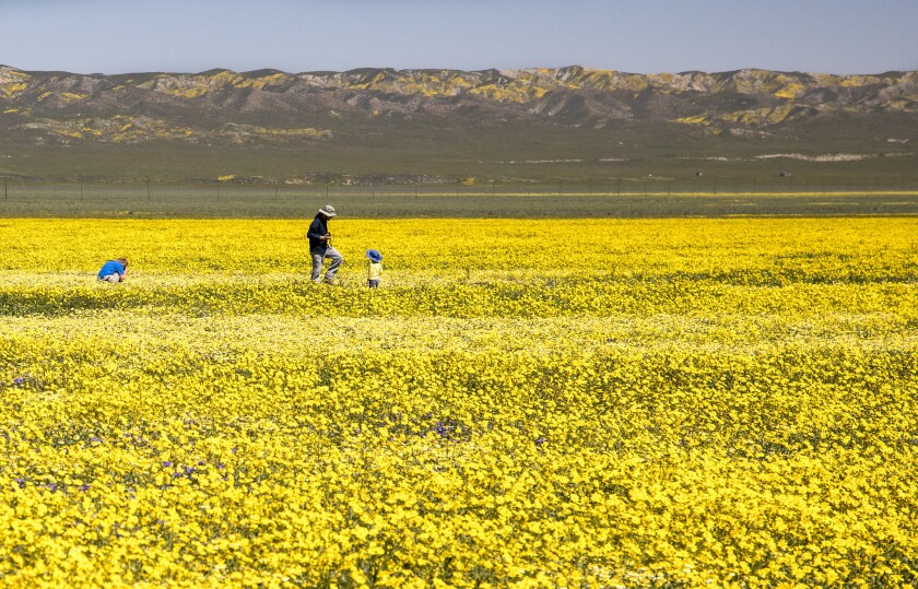 The national monument is part of a long grassland plain, which this year is having a spectacular wil