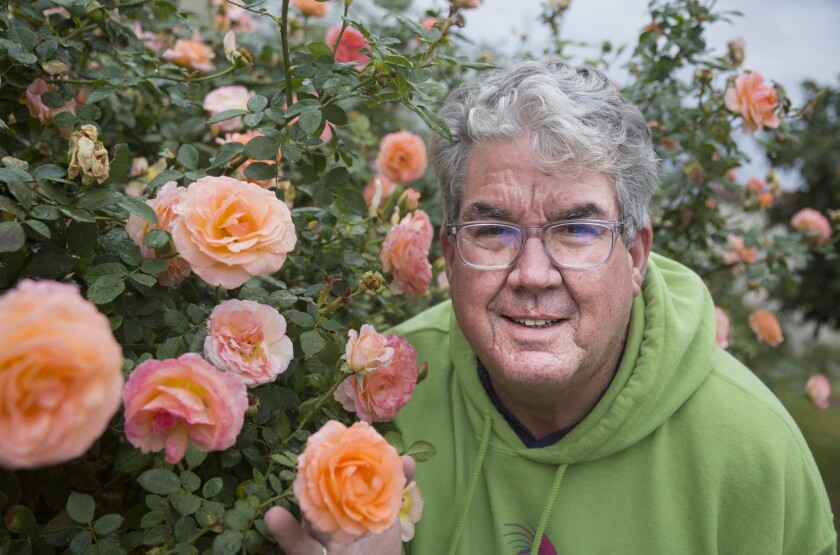 Tom Carruth, here with Jump For Joy roses, is the rose curator at the Huntington Library, Art Collections and Botanical Gardens. California's long-running drought has led him to rethink his gardening practices.