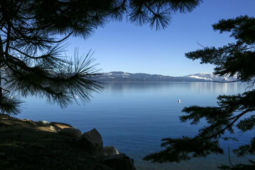 Lake Tahoe is framed by pine trees.