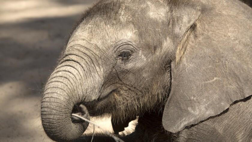 """Nature: 'Naledi: One Little Elephant'"" on PBS."