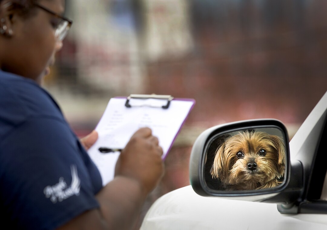 U.S.: Lex Taylor, a veterinarian assistant, checks in a Yorkshire terrier named Gabby on March 26 in Roanoke, Va. Angels of Assisi has started offering its low-cost vet clinic on a curb outside the clinic to reduce people's exposure to the coronavirus.