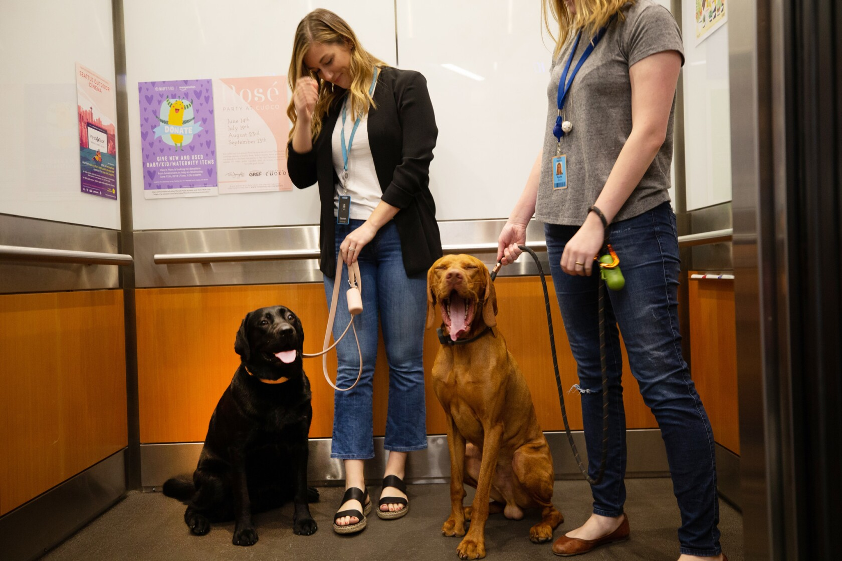 Alexa, how many dogs come to work at Amazon Seattle? 7,000 - Los
