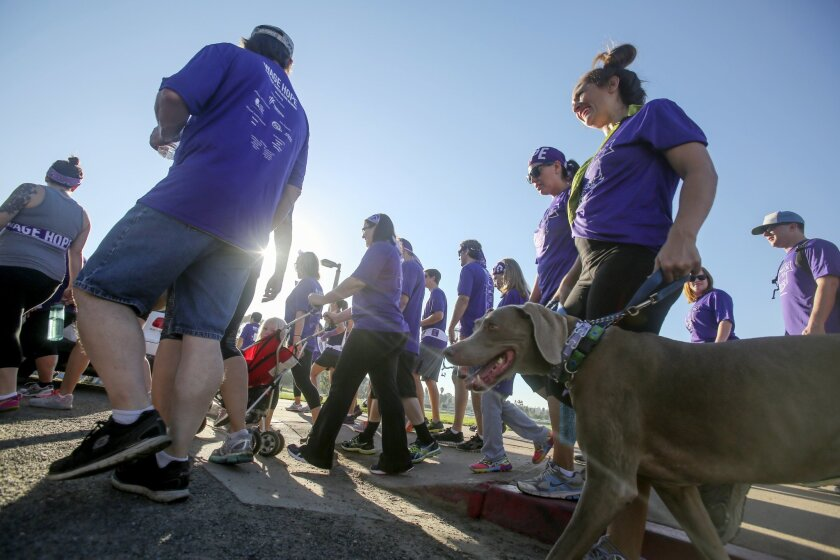 A dog joins walkers during the PurpleStride run/walk for pancreatic cancer Sunday at Mission Bay. photo by Bill Wechter