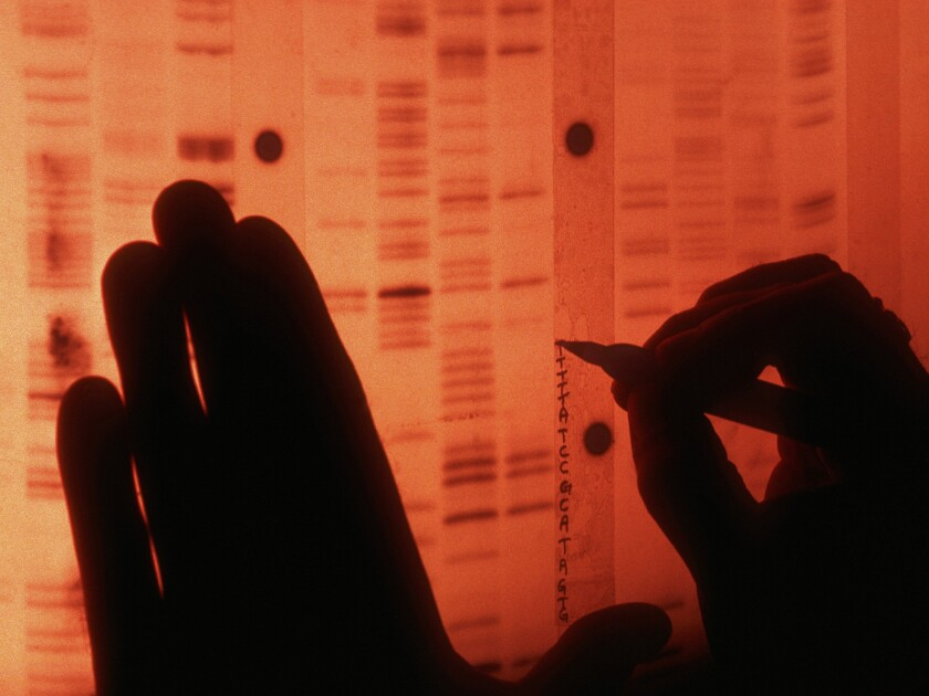 A scientist labels each protein in the radio nucleotide sequence of human genes to create a unique DNA profile.
