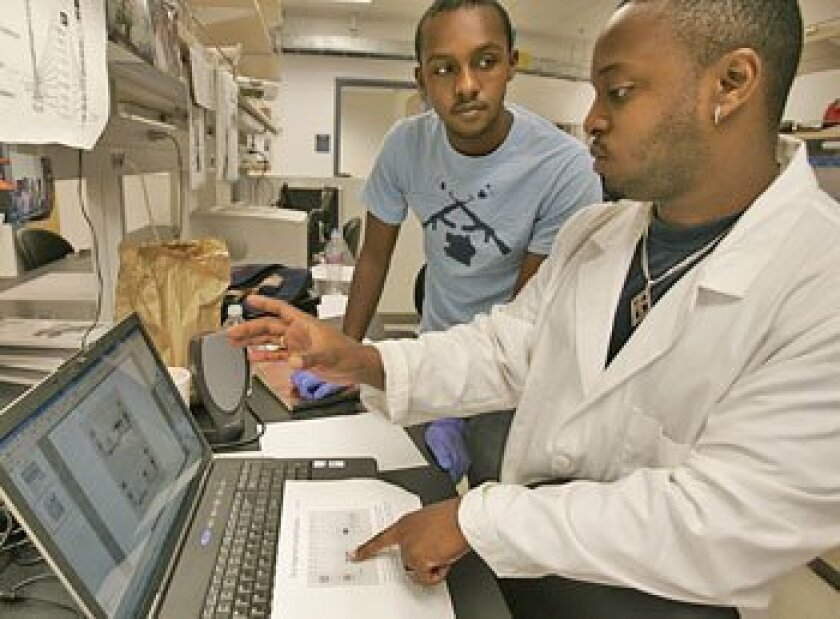 UCSD undergraduate Mohamud Qadi (left) worked with Robert Drummond, a medical and doctoral student, in Antonio De Maio's lab.   (Peggy Peattie / U-T)