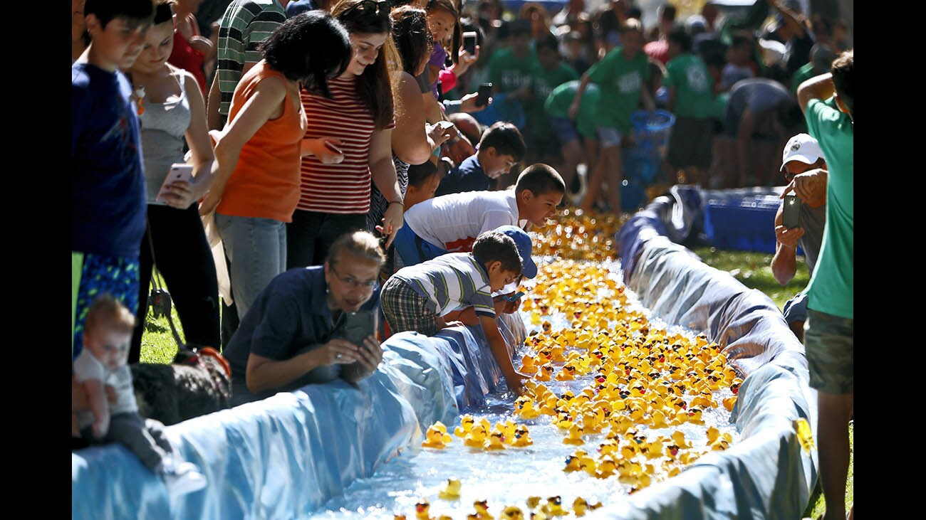 Photo Gallery: The annual Kiwanis Club of Glendale Duck Splash at Verdugo Park