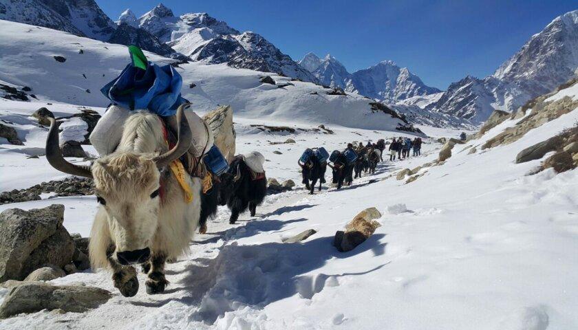 Everest Safety