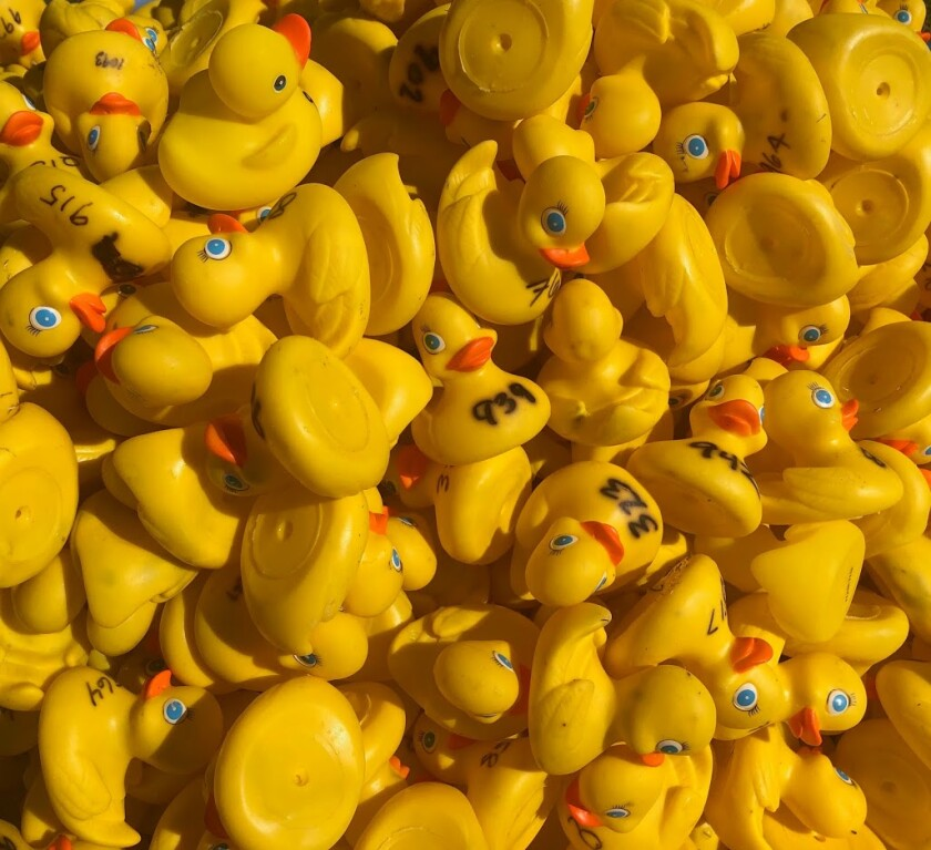 Ducks ready to go for the June 7 event.