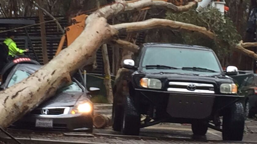 Two large eucalyptus trees fell and smashed 5 cars at UCSD.