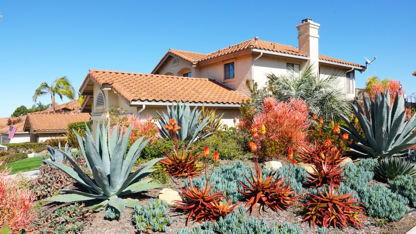 Succulents are among options for fire-wise landscaping.