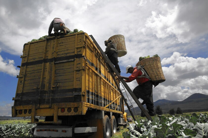 Laborers load broccoli on a truck at a farm in Michoacan, Mexico. After a Times investigation revealed labor abuses at Mexican agribusinesses, Wal-Mart, the world's largest retailer, says it will work with the Mexican government to improve farmworkers' conditions.