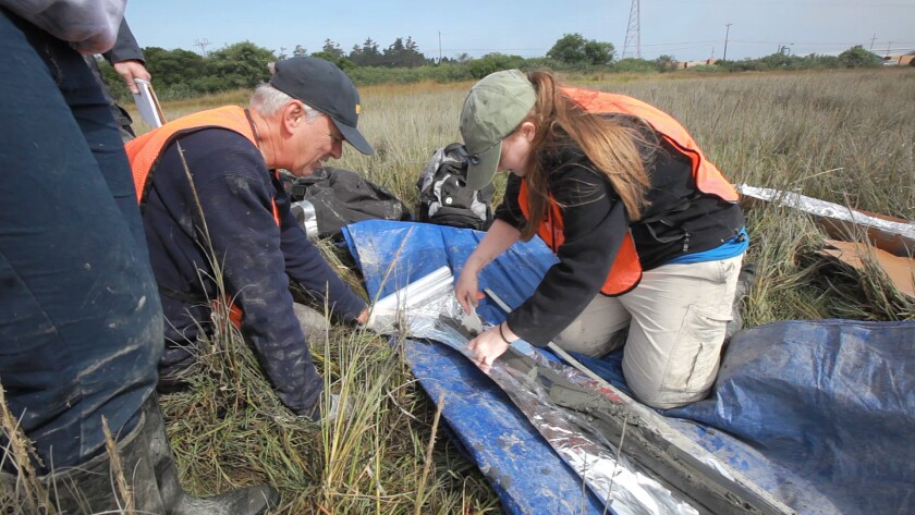 UCLA professor Glen MacDonald and his research team examine a sediment sample from a marsh in Arcata, Calif., during an unrelated study.