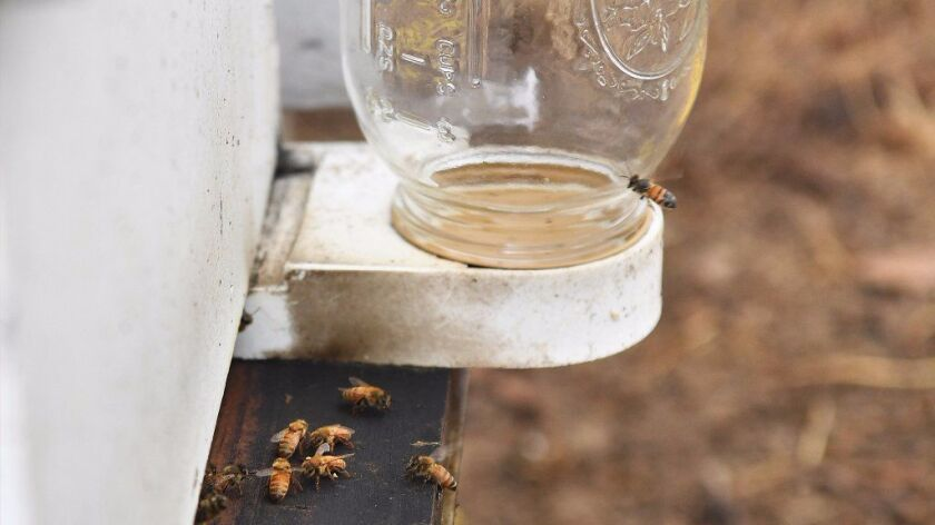 The couple became backyard bee keepers to help the insects face environmental challenges.