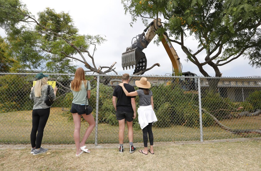 Residents watch as Newport Mesa Unified contractors remove Rosewood trees at Ensign Intermediate School on Monday.