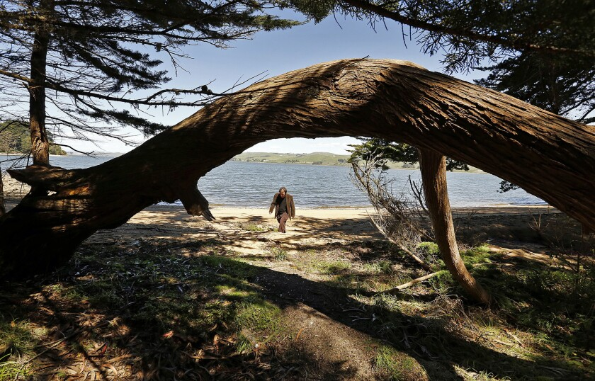 Trees frame a view of Tomales Bay as Peter Lewis, youngest son of artist Clayton Lewis, walks to the original Coast Miwok buildings at Laird's Landing in Point Reyes National Seashore.