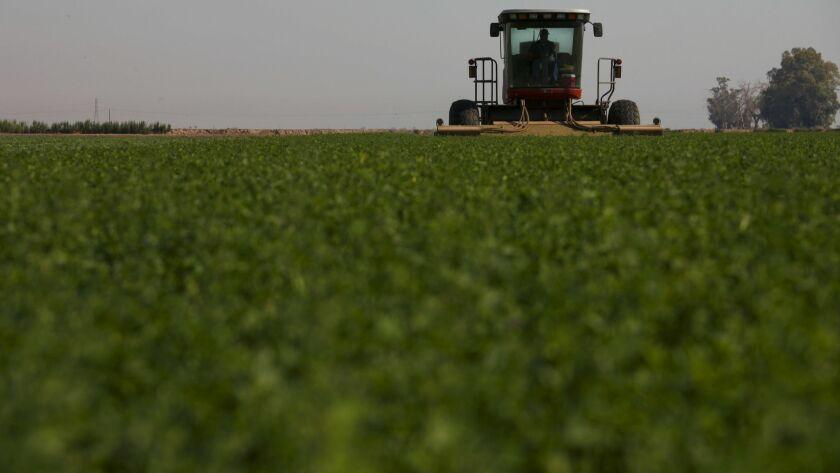 A mower cuts through a mature crop of alfalfa in an Imperial Valley field.