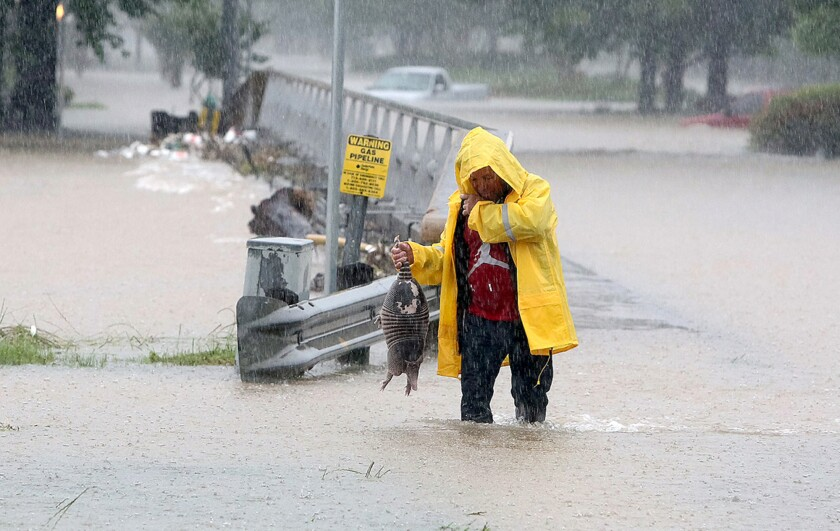 A man rescues an armadillo from flood waters in Houston on Monday.