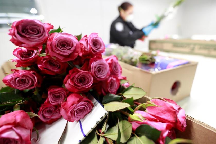 Si Vas A Cruzar Arreglos Florales A Estados Unidos Para El Día De