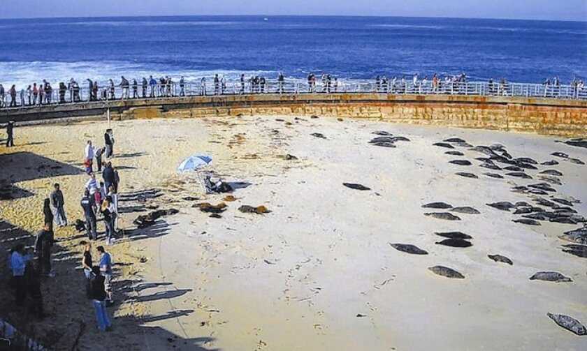 Lawyer and pro-seals activist Bryan Pease took this photograph Christmas weekend. It shows a lone beach-goer who placed his lounge chair and umbrella across the rope intended to separate people from  seals during pupping season at the Children's Pool beach in La Jolla.