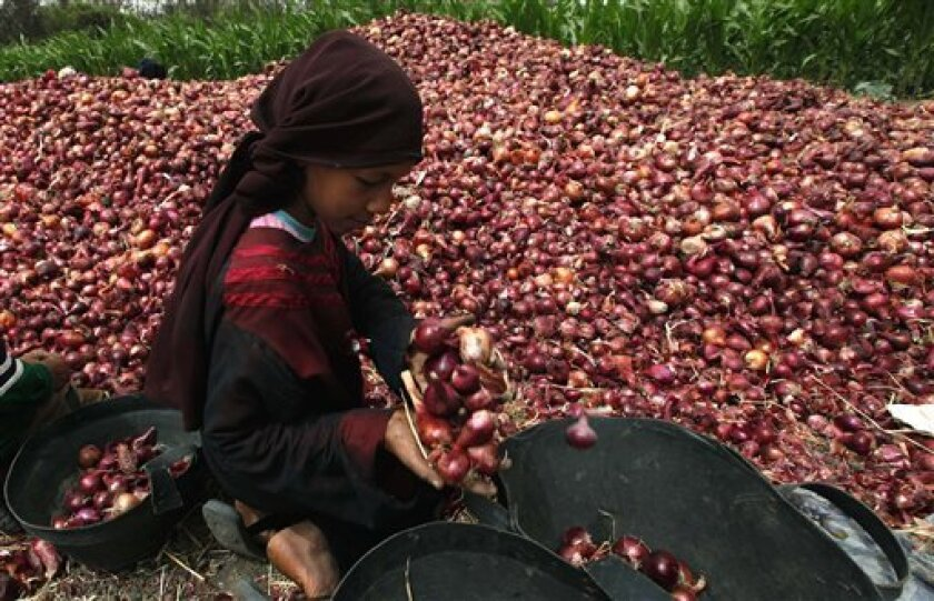 In this photo taken Thursday May 27, 2010, an Egyptian girl sorts onions during the harvest of crops at a farm on the outskirts of Cairo, Egypt Thursday, May 27, 2010. (AP Photo/Nasser Nasser)