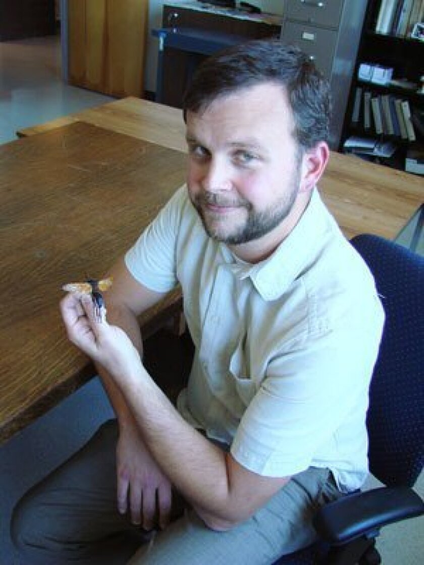 Michael Wall, who holds several titles at The Nat, including curator of entomology, holds a tarantula hawk. Found throughout San Diego County, they hunt tarantulas and have the most painful sting of any wasp in North America. Photo/San Diego Natural History Museum