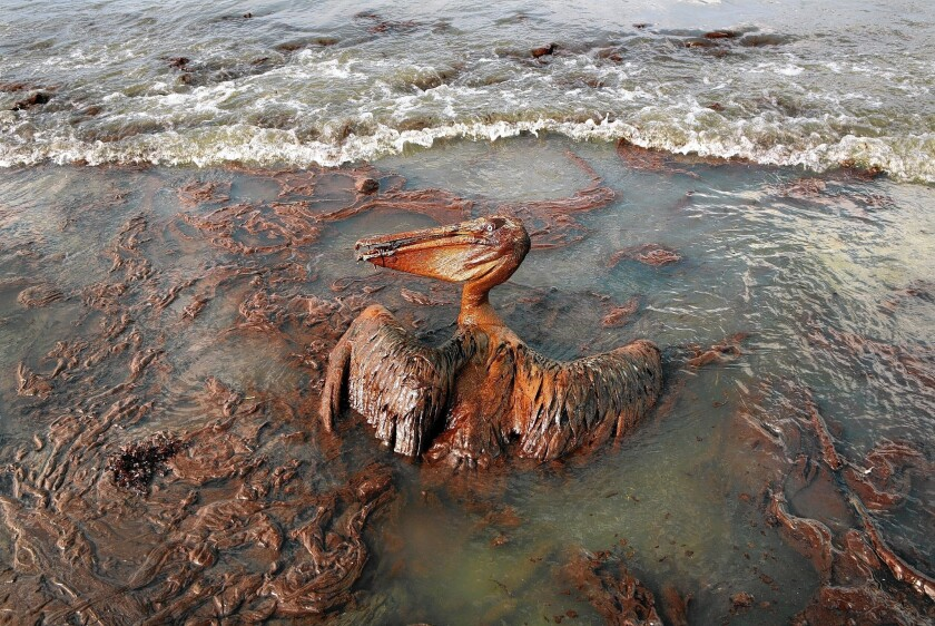Image result for gulf oil spill